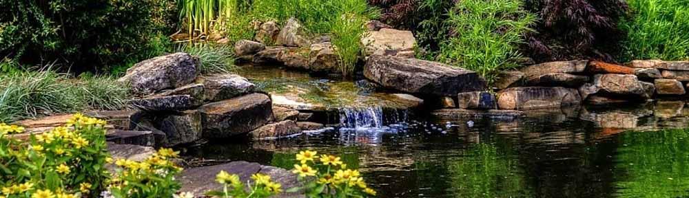 Cudiado de estanques
