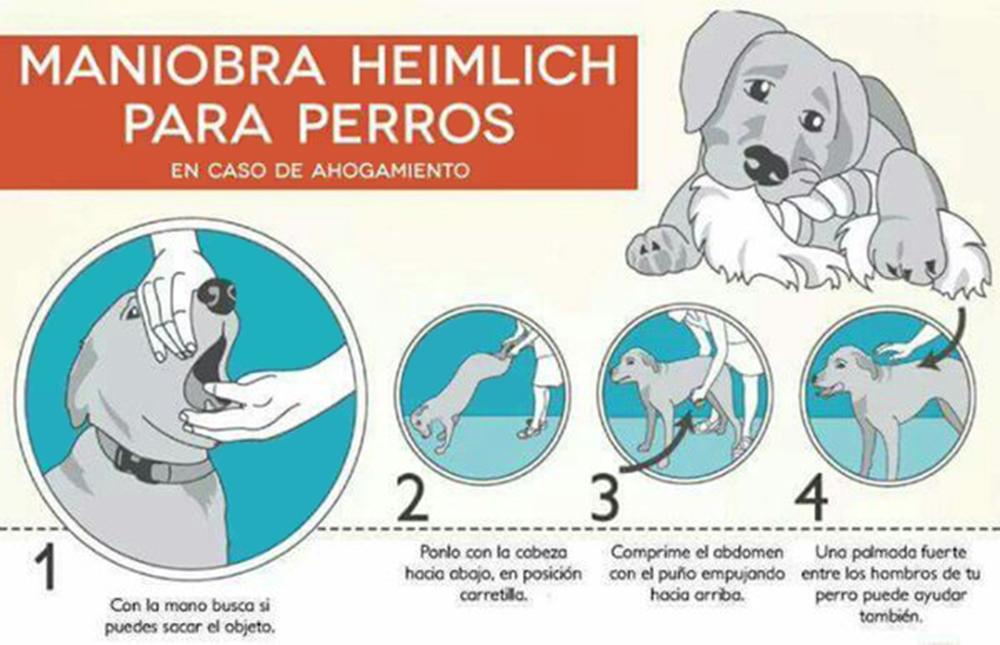 Maniobra heimlich para perros