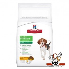 Puppy Healthy Development Medium Chicken