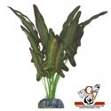 Planta de seda Syngonium grande