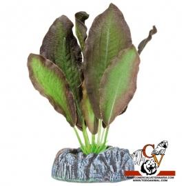 Plante de seda Echinodorus Marron