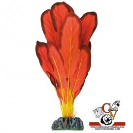 Plante de seda Echinodorus Rojo