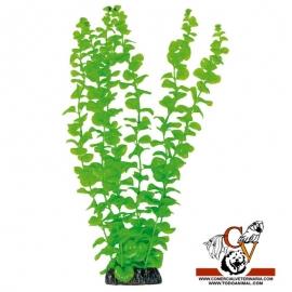 Planta plástica Bacopa Aúrea