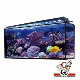 Acuario marino AQUA OCEAN Hydra 240 l.