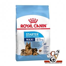 Maxi Starter Royal Canin