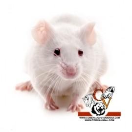 Raton de laboratorio