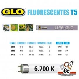 Fluorescente LIFE-GLO T5