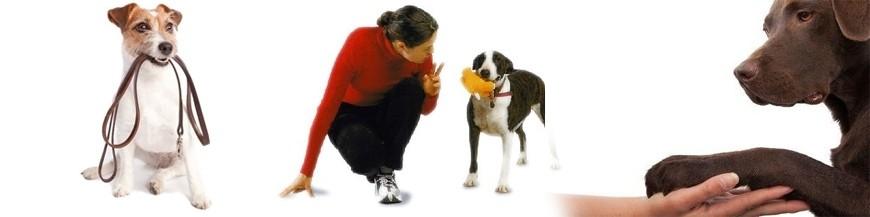 Educación para cachorros