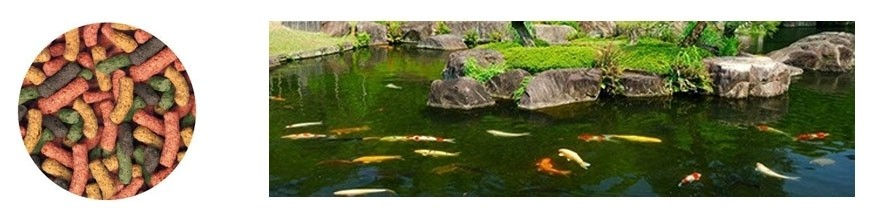 Comida para peces de estanque comercial veterinaria for Comida para peces de estanque